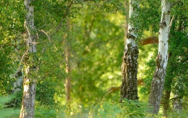 Фото леса летом в хорошем качестве 014
