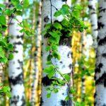 Фото леса летом в хорошем качестве