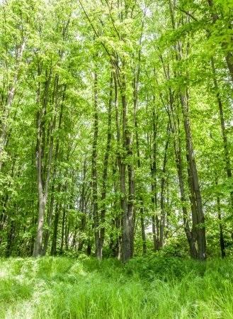 Фото леса летом в хорошем качестве 018