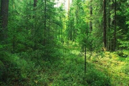 Фото леса летом в хорошем качестве 021
