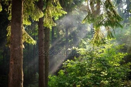 Фото леса летом в хорошем качестве 022