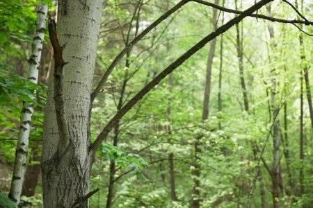 Фото леса летом в хорошем качестве 023