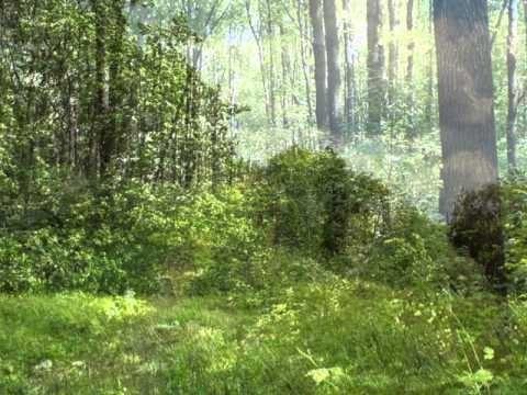 Фото леса летом в хорошем качестве 024