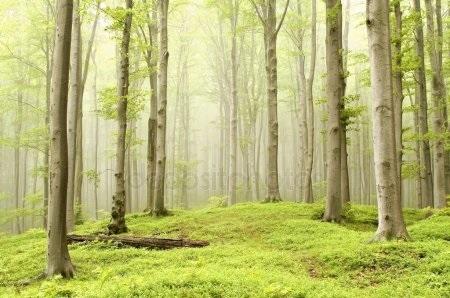 Фото леса летом в хорошем качестве 025