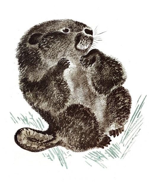 Чарушин картинки к рассказам о животных, картинки свой