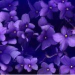 Интересные фиолетовые фото — подборка
