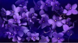 интересные фиолетовые фото 011