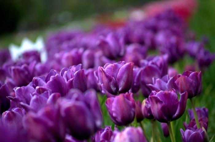 интересные фиолетовые фото 012