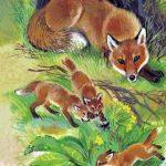 Картинки для детей лиса с лисятами — сборка