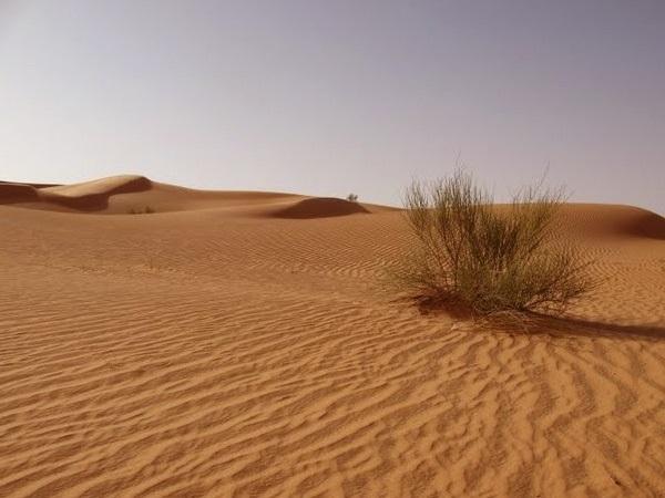 картинки для детей пустыня 010