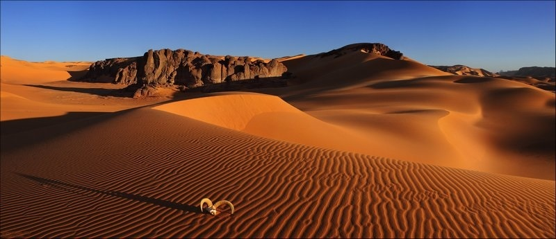 картинки для детей пустыня 013