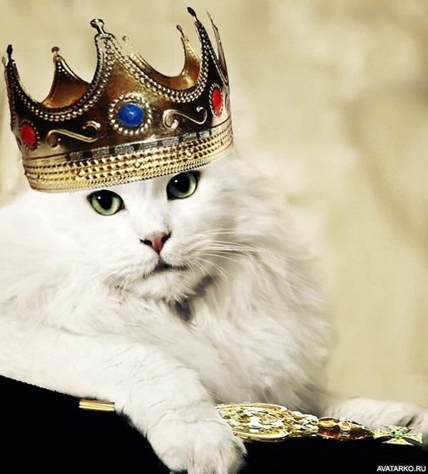 картинки с короной на голове 014