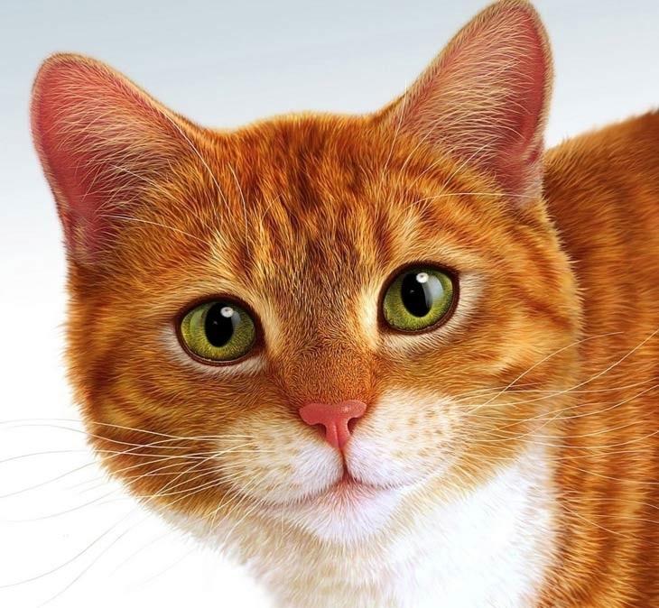 милые кошачьи мордочки картинки и фото 002