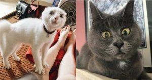 милые кошачьи мордочки картинки и фото 015