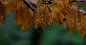 милый листик осенний картинка 005
