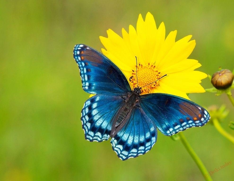 прикольные бабочки мультяшные 001