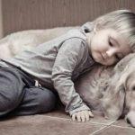 Всемирный день домашних животных — классные открытки (22 фото)
