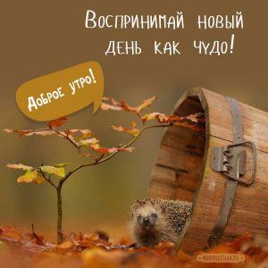Доброе утро осень красивые картинки (1)