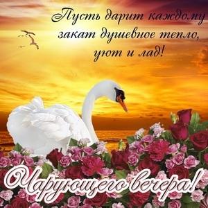 Добрый вечер воскресенья картинки011