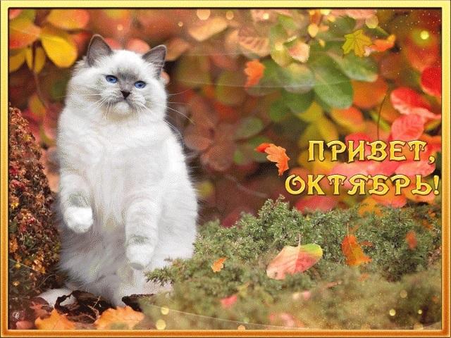 Красивые картинки с началом октября 020