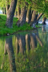 Красивые картинки утро в лесу 011