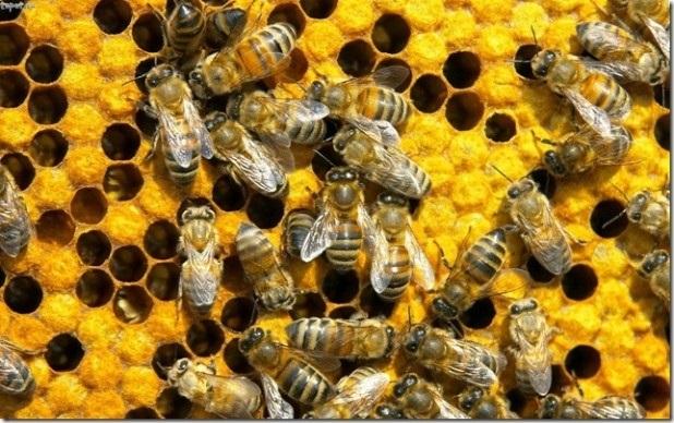 Мед и пчелы картинки для детей 020