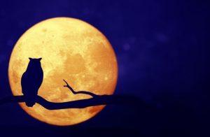 Милые картинки луна и сова 006