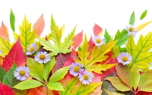 Обои для рабочего стола осенние цветы   скачать бесплатно (10)