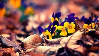 Обои для рабочего стола осенние цветы   скачать бесплатно (11)