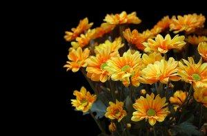 Обои для рабочего стола осенние цветы   скачать бесплатно (12)