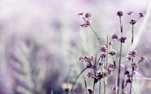 Обои для рабочего стола осенние цветы   скачать бесплатно (13)
