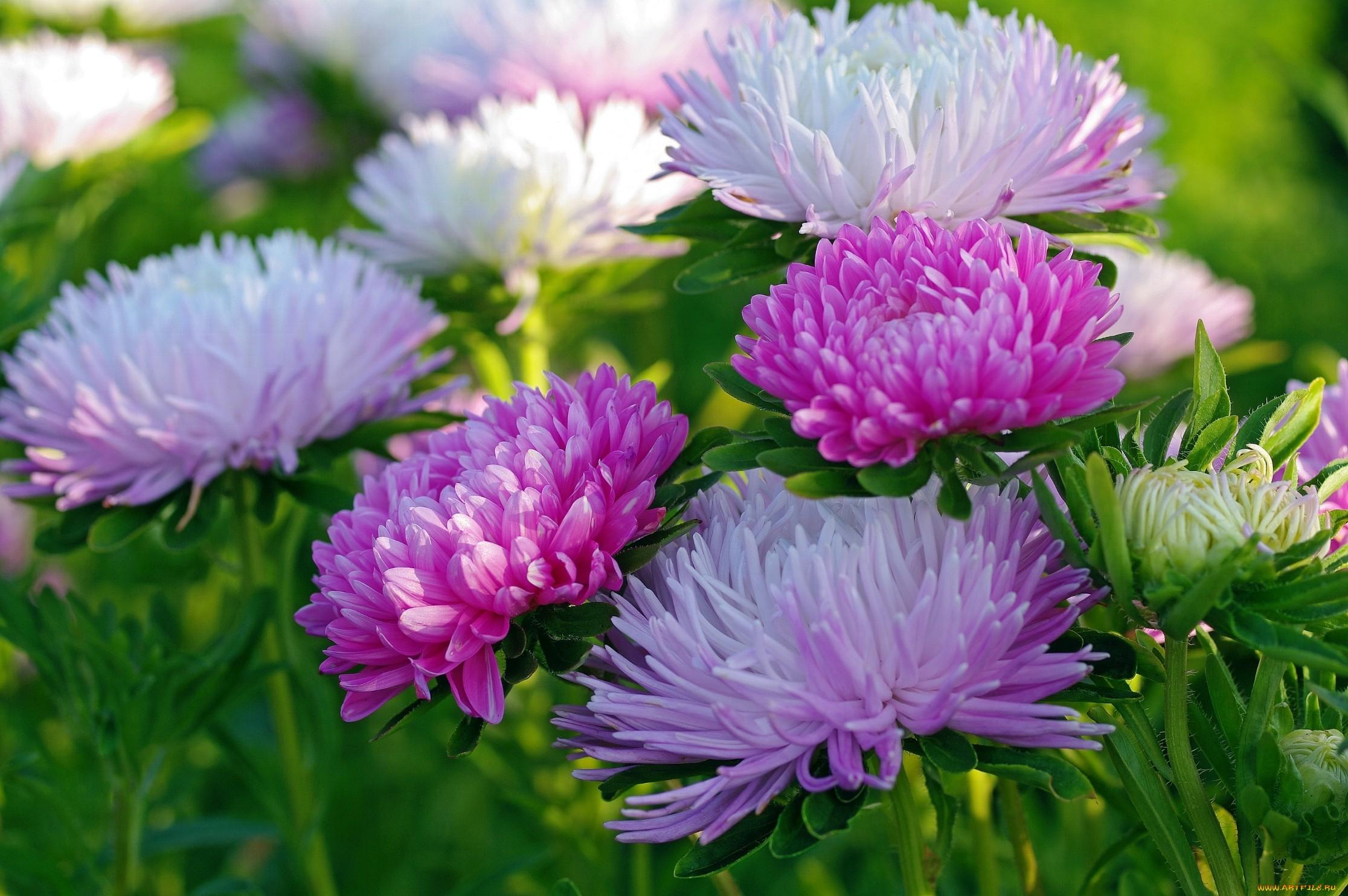 Обои для рабочего стола осенние цветы   скачать бесплатно (15)