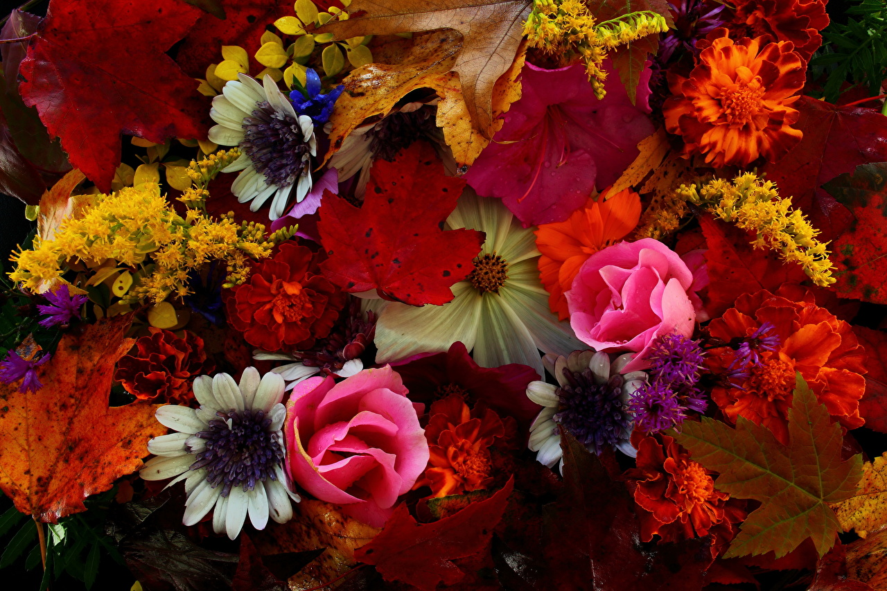 Обои для рабочего стола осенние цветы   скачать бесплатно (16)