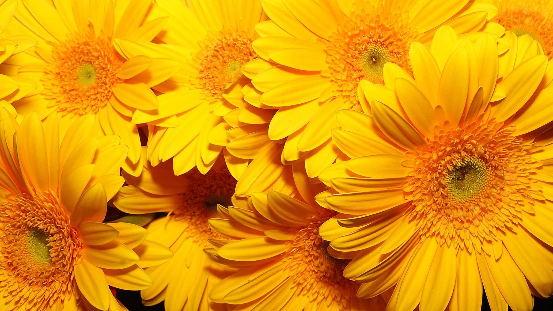 Обои для рабочего стола осенние цветы   скачать бесплатно (17)