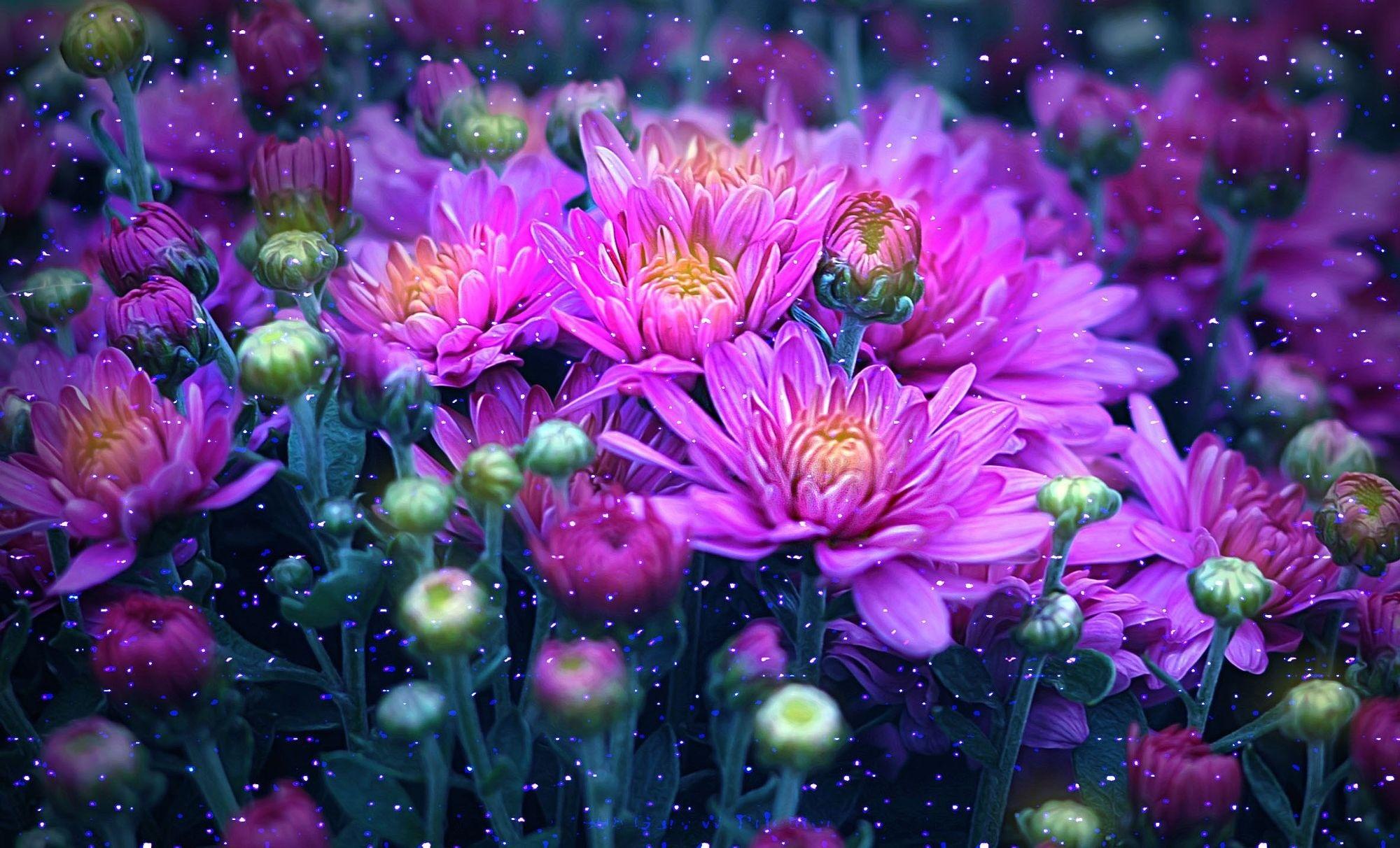 Обои для рабочего стола осенние цветы   скачать бесплатно (18)