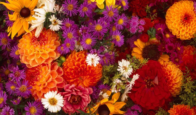 Обои для рабочего стола осенние цветы   скачать бесплатно (2)