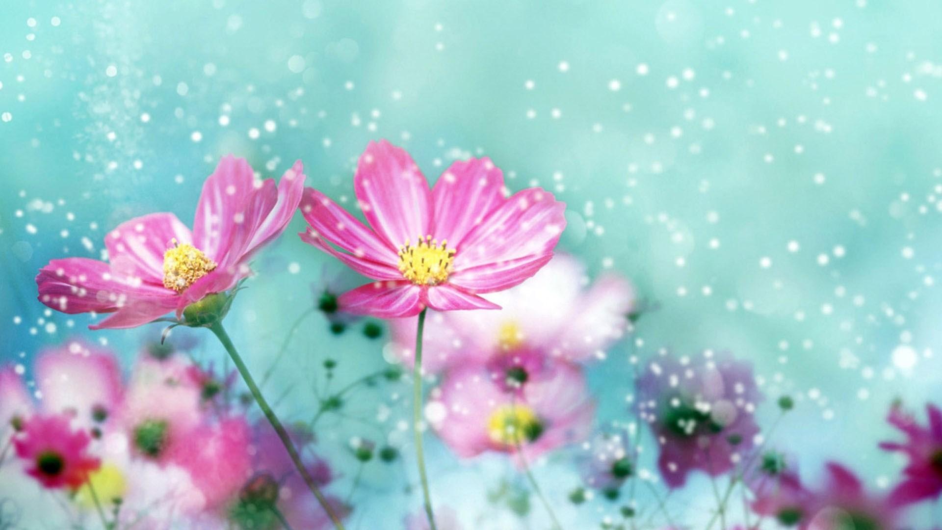 Обои для рабочего стола осенние цветы   скачать бесплатно (23)