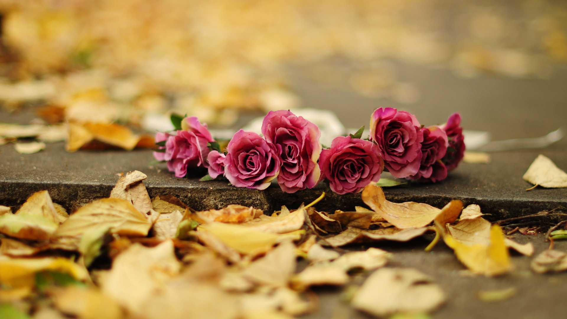 Обои для рабочего стола осенние цветы   скачать бесплатно (3)