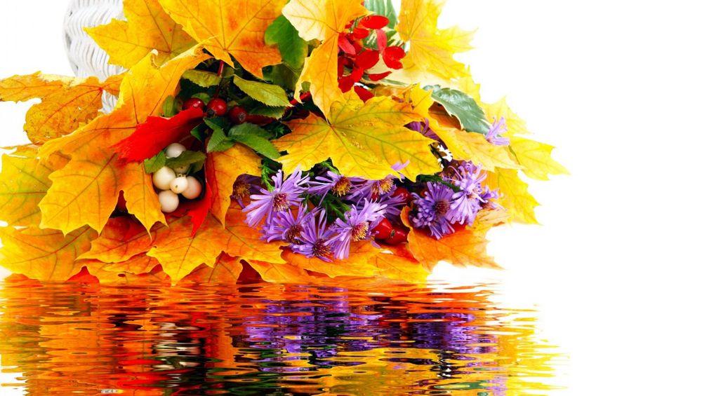 Обои для рабочего стола осенние цветы   скачать бесплатно (6)