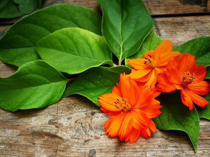 Обои для рабочего стола осенние цветы   скачать бесплатно (7)