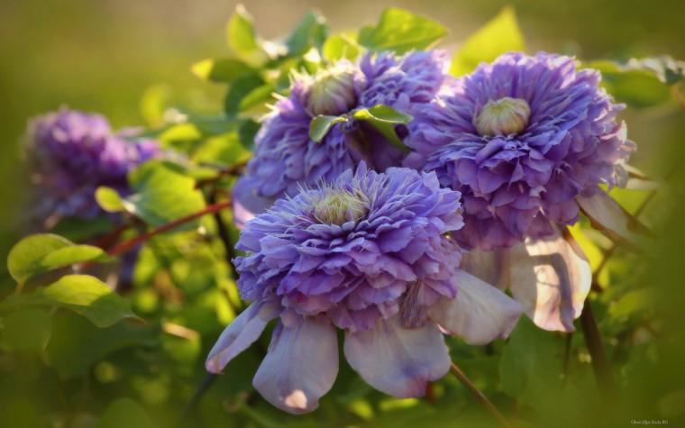 Обои для рабочего стола осенние цветы   скачать бесплатно (8)