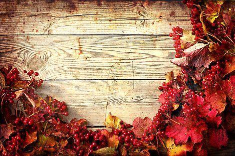Обои для рабочего стола осенние цветы   скачать бесплатно (9)