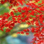 Обои для рабочего стола поздняя осень природа ноябрь
