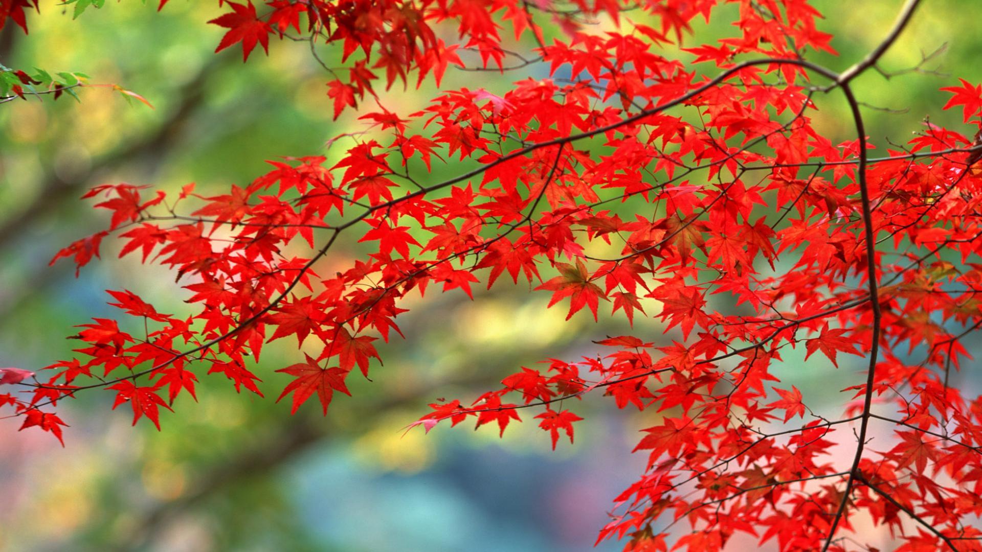 Обои для рабочего стола поздняя осень природа ноябрь (1)