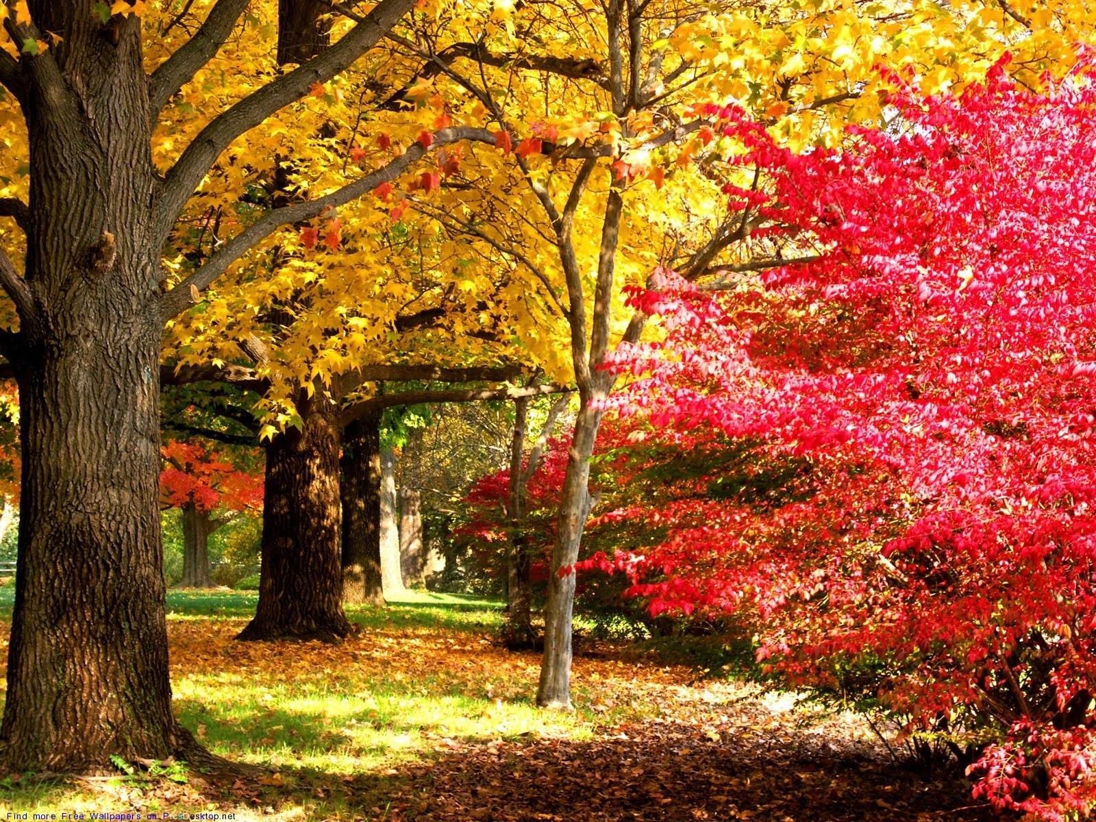 Октябрь фон на рабочий очень красивые (1)