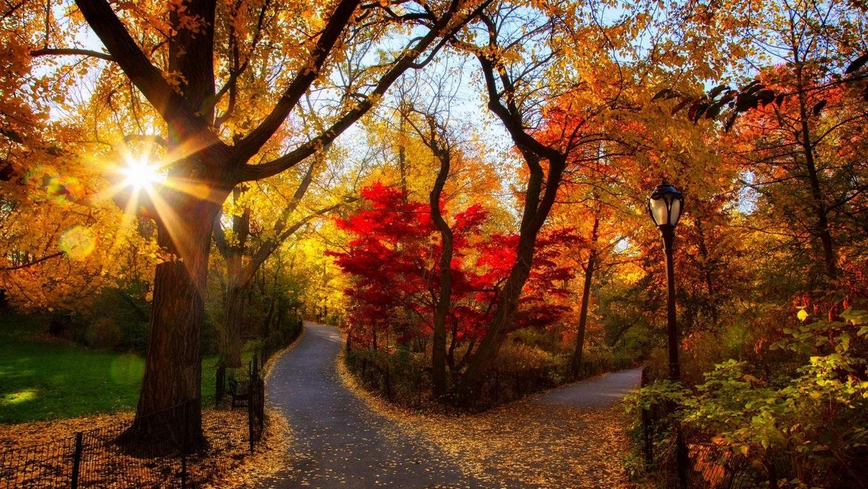 Октябрь фон на рабочий очень красивые (2)