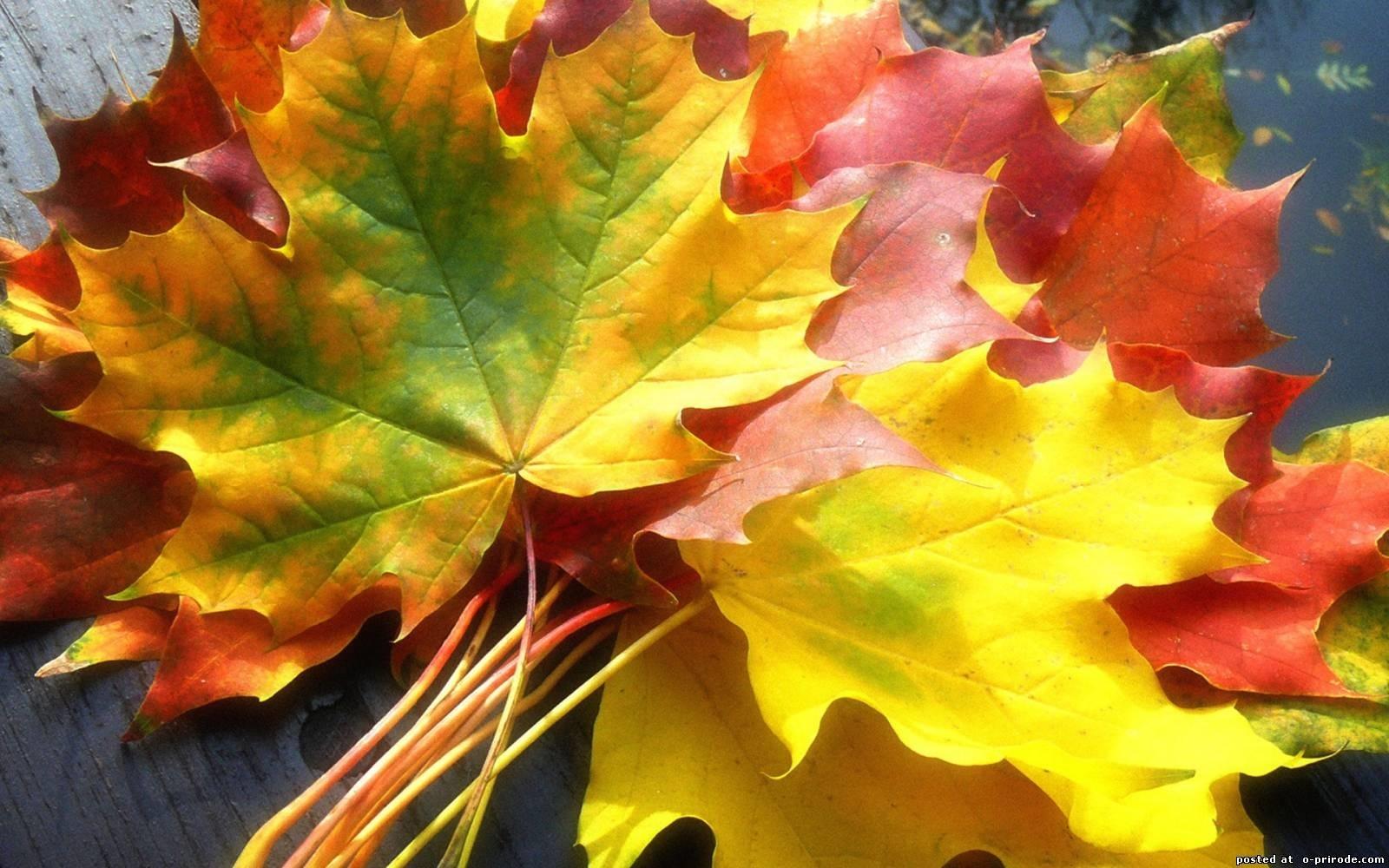 Октябрь фон на рабочий очень красивые (4)
