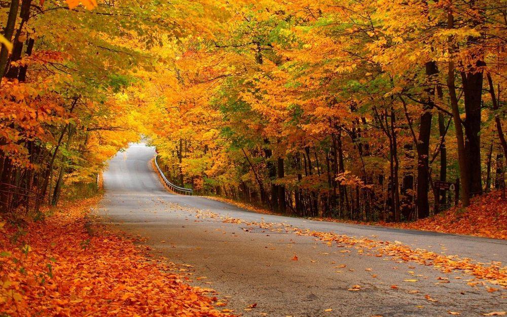 Осенний лес обои на рабочий стол   скачать бесплатно (1)