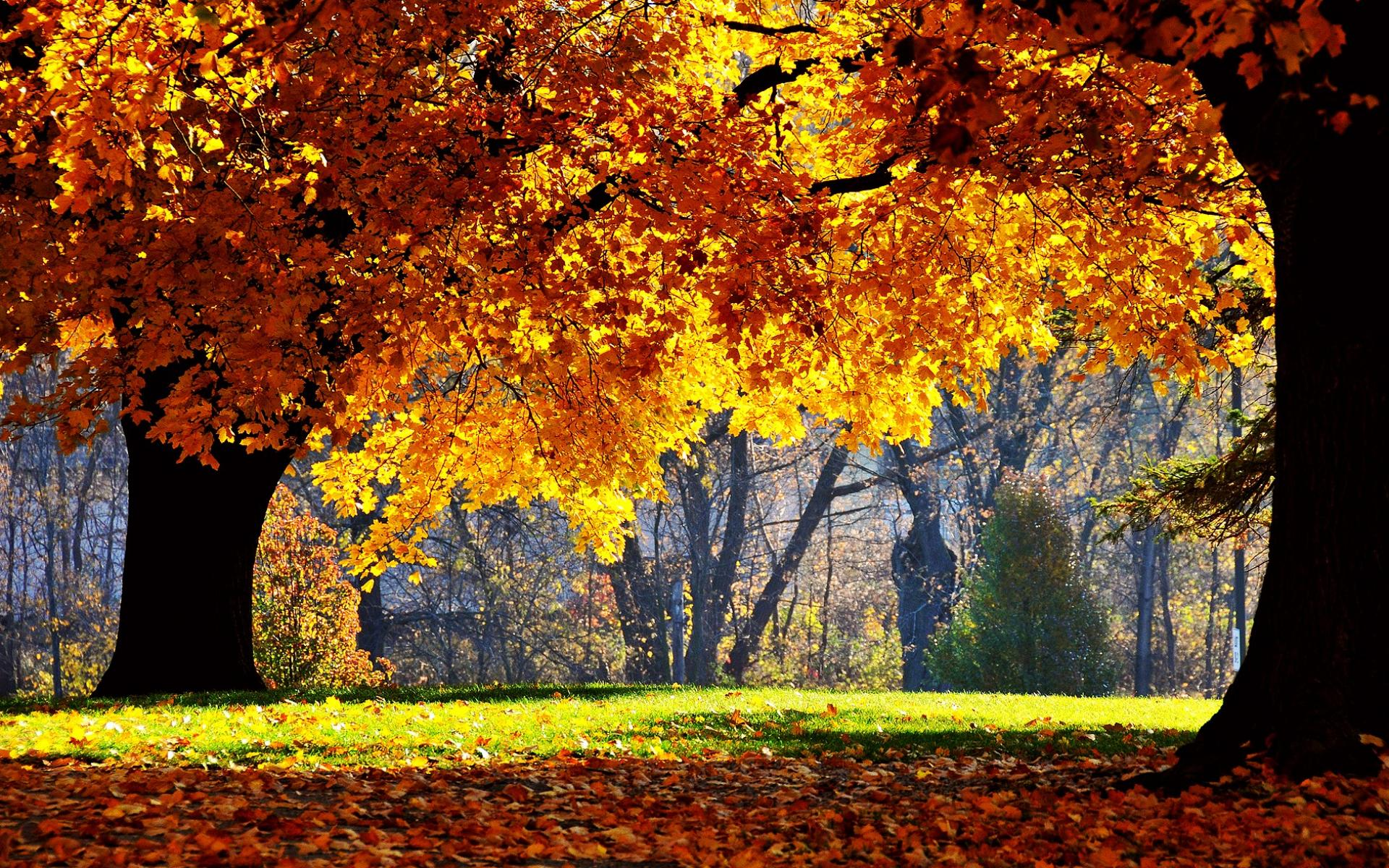 Осенний лес обои на рабочий стол   скачать бесплатно (10)