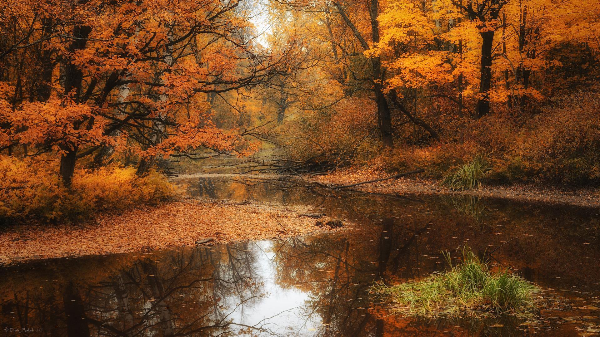 Осенний лес обои на рабочий стол   скачать бесплатно (11)
